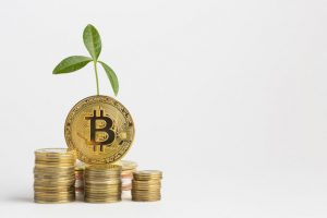 bitcoin-bundle-with-plant_23-2148285268-obsidiam.com_